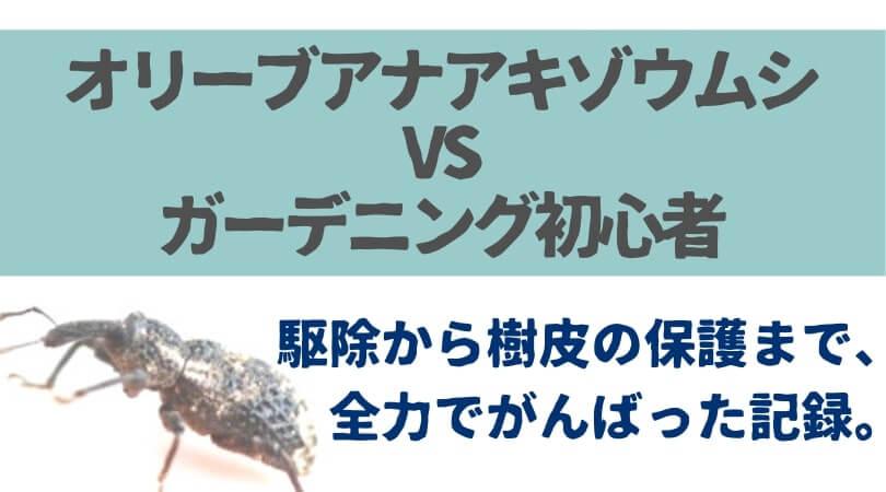 オリーブアナアキゾウムシ駆除・対策の記録【ガーデニング初心者主婦の大奮闘】